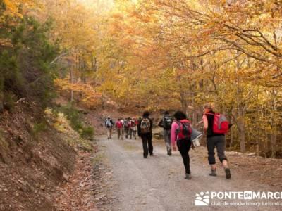 Singles madrid senderismo, Parque Natural del Hayedo de Tejera Negra; montañismo madrid